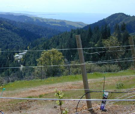 Ocean View from New Vineyard
